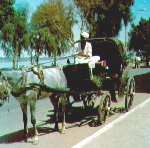 Main transportation in Luxor